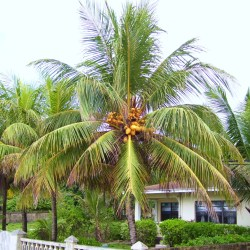 A House with Palm Trees