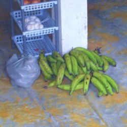 Plantain Bananas in a Store