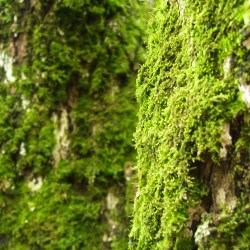 Moss on Trees (Tellico, Tennessee)