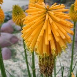 Flowers in Madrid