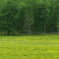 A Meadow (Cades Cove, Tennessee)