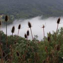 Flowers, Fog, and the Blue Ridge Mountains
