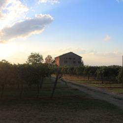 Vineyards of Emilia